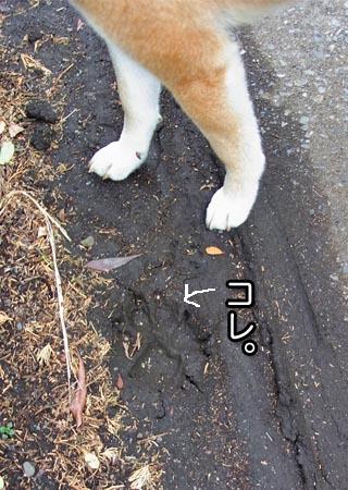 19日ブログ6.jpg